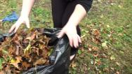 Stock Video Footage of Woman raking leaves 6