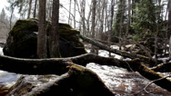 Stock Video Footage of heavy water rapids passing through trees big stone