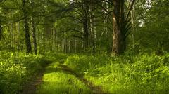The road in the forest - stock photo