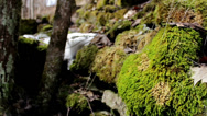 Tree stone covered in moss and some part still covered in snow Stock Footage