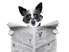 dog newspaper - stock illustration