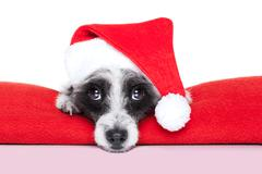 christmas dog - stock illustration