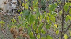 Overblown malve in the autumn wind Stock Footage