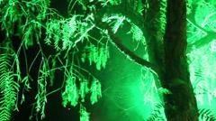 Tree web fog HD Stock Footage