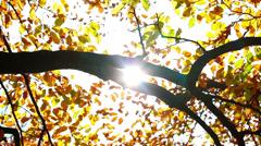 Branch sun beam HD Stock Footage