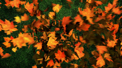 Thanksgiving Leaves Stock Footage