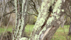 Lichens on Tree Bark Stock Footage