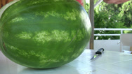 Stock Video Footage of Watermelon and Slice