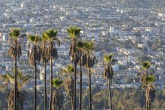 hollywood hillside palms - stock photo