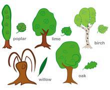 Stock Illustration of Deciduous Trees