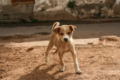 Cute stray puppy in streets of india - stock photo