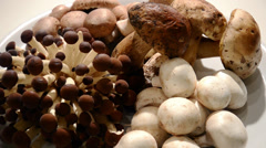 Mushrooms Stock Footage