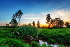 summer sunset field - stock photo