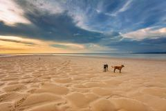 dogs on the beach at sunset - stock photo