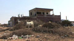 Donkey in a destroyed farm - stock footage