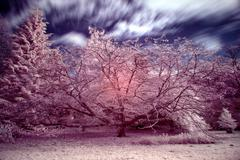 Stock Photo of stunning false color infrared forest landscape image