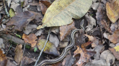 Small snake in forest Stock Footage