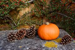 small pumpkin and fir cones on a stone bench - stock photo