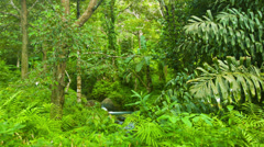 Rainforest of thailand. a small stream gurgles Stock Footage
