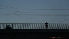 Thousands of starlings fly 23 Stock Footage