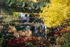 yellow tree lily pads colorful water reflections van dusen gardens - stock photo