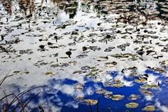 white clouds blue sky reflection abstract van dusen gardens vancouver british - stock photo