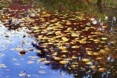 lily pads reflection abstract green red blueyellow van dusen gardens vancouve - stock photo