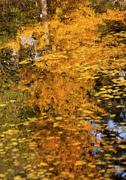 yellow tree fall leaves reflection abstract van dusen gardens vancouver briti - stock photo