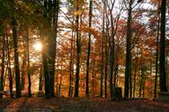 Stock Photo of autumn forest scenery