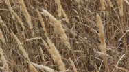 Stock Video Footage of dry grass on the meadow. autumn time. hd