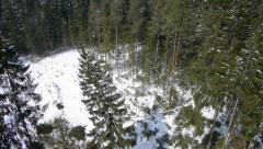 SLOW MOTION: cut spruce is falling - stock footage