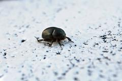 small beetle on a white background - stock photo