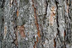 old lime tree bark seamless background pattern brown tree filling the frame - stock photo