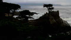 Silhouette of cypress tree with ocean in background Stock Footage