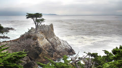 HDR - Monterey cypress tree along coast Stock Footage