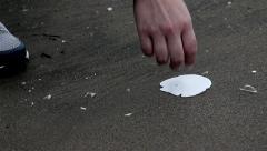 Finding a sand dollar on beach Stock Footage