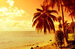 tropical coconut palm tree sunset - stock photo