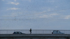 Thousands of starlings fly 25 (ideal for title sequence) Stock Footage