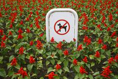 sign prohibiting dog walking in a botanical garden, no dogs sing in flowers - stock photo