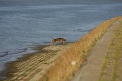 beauty of the river in addition to the promenade, dog near of the river - stock photo