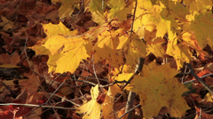 Yellow Autumn leaves and withered leaves on the ground Stock Footage