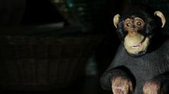 Robot monkey chimp Stock Footage