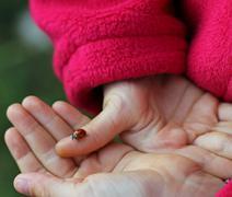 Ladybird lucky charm in the hand of the girl Stock Photos