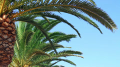 Palm tree swaying in the wind Stock Footage