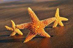 starfishes on the sand of a beach - stock photo
