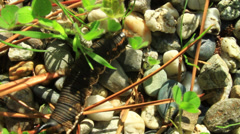 Caterpillar on the stones Stock Footage