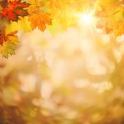 abstract autumnal backgrounds for your design - stock illustration