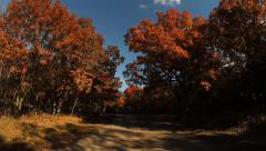 HD Stock - Fall Trees moving vehicle driving - stock footage