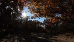HD Stock - through the trees, amazing shot Stock Footage