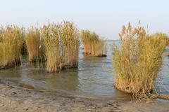 landscape of lake with reeds - stock photo